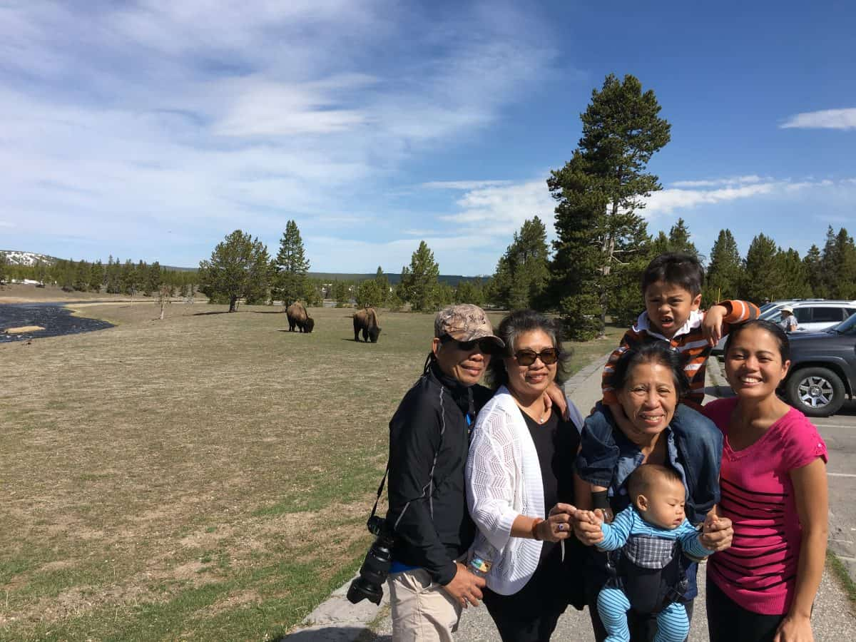 Dancing With The Bison In Yellowstone